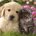 Brief Facts You Need To Know Before You Decide To Have A Fur Baby